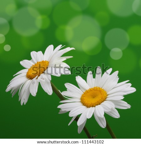 chamomiles on green blur background - stock photo