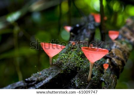champagne mushroom - stock photo