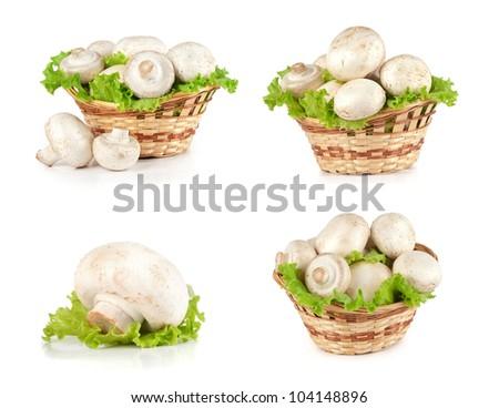 Champignon mushrooms isolated on white background set - stock photo