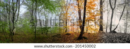 Change of four seasons in the forest panorama - stock photo