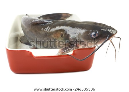 Catfish isolated stock photos images pictures for Fishing channel on dish