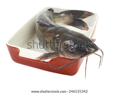 Channel catfish in a ceramic baking dish cooking isolated on white background - stock photo