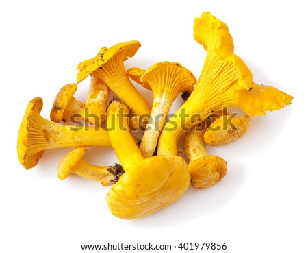 chanterelle mushrooms isolated on a white background