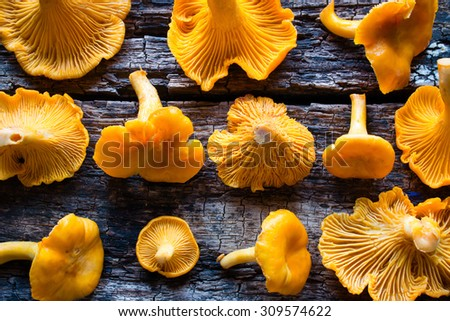 Chanterelles on a wooden background - stock photo