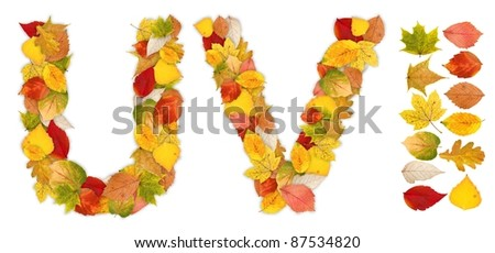 Characters U and V made of colorful autumn leaves. Standalone design elements attached - stock photo