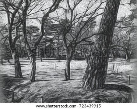 Charcoal Drawing The Japanese Garden At Katsura Imperial Villa In Kyoto Japan