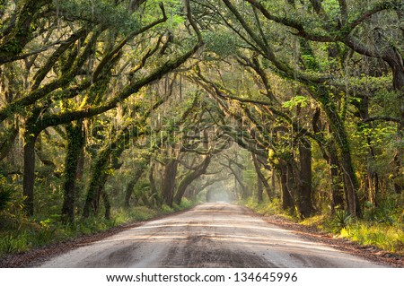 Charleston Botany Bay Road Edisto Island Lowcountry South Carolina - stock photo
