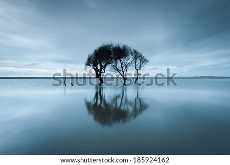 Charleston South Carolina Folly Beach Lone Tree Reflecting in Tidal Pool Along Atlantic Ocean Coastline - stock photo