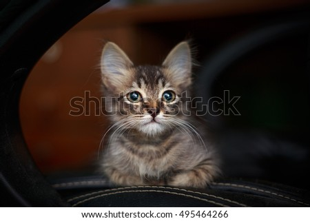 Charming gray kitten lying on a chair