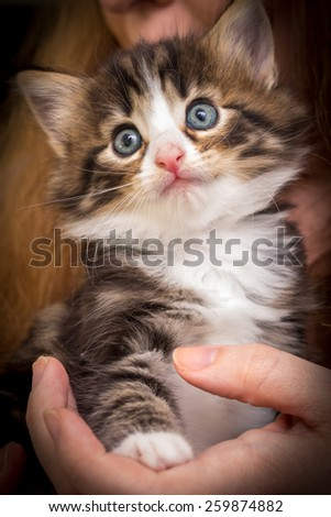 Charming kitten on a woman's hands - stock photo
