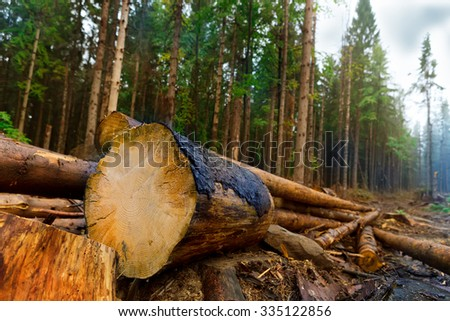 charred trees felled in the forest - stock photo