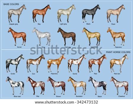 Chart of the 22 main horse coat colors - stock photo