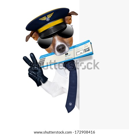 check in pilot dog with boarding pass beside a white placard - stock photo