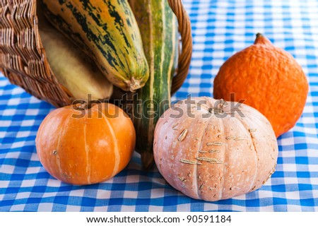 checkered tablecloth in the background wicker basket and lot of pumpkins long, round, big, small, orange, green - stock photo