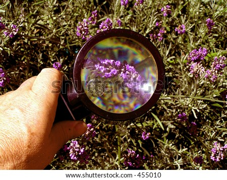 Checking the Crop  Looking for insects and disease - stock photo