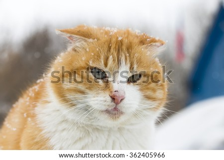 cheeky ginger cat on the fence in a snowstorm