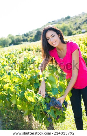 cheerful and happy young woman picking grapes during wine harvest in vineyard - stock photo