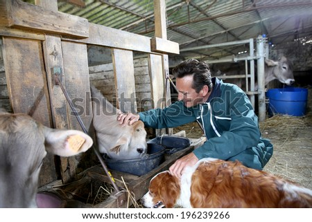 Cheerful farmer feeding cows in barn - stock photo