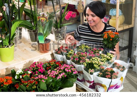 Cheerful mature woman florist fixing a kalanchoe calandiva flower in the floral shop - stock photo