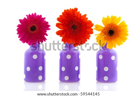 Cheerful purple vases with white dots and colorful Gerber