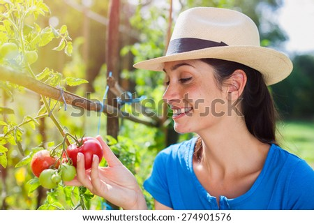 Cheerful woman gathering fresh tomatoes in her garden - stock photo