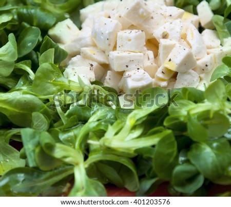 Cheese mozzarella and salad: mediterranean food - stock photo