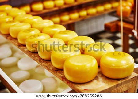 Cheese wheels on the shelves in diary production factory  - stock photo