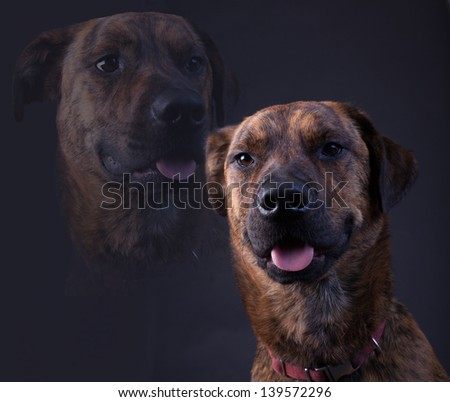 Cheesy dog graduation portrait - stock photo