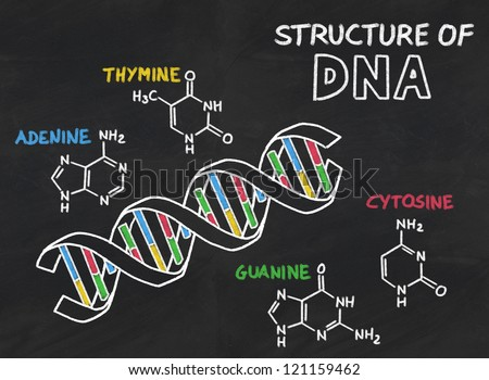 chemical structure of DNA on a blackboard - stock photo