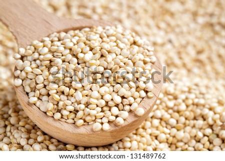 Chenopodium quinoa - stock photo