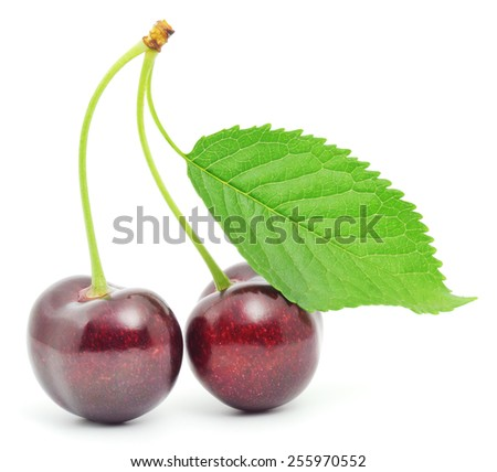 Cherries on the branch isolated over white background - stock photo