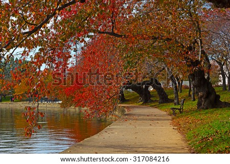 Cherry alley trees near Tidal Basin in Washington DC, USA. Autumn colors of cherry trees with reflections. - stock photo