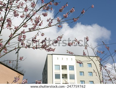 Cherry blossom and fifties architecture detail in April, Vallingby, Stockholm, Sweden. - stock photo