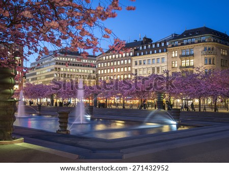 Cherry blossom at night, in Kungstradgarden, Stockholm, Sweden. - stock photo