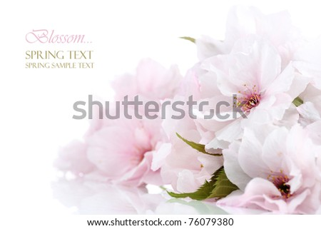 Cherry blossom border with copy space - stock photo