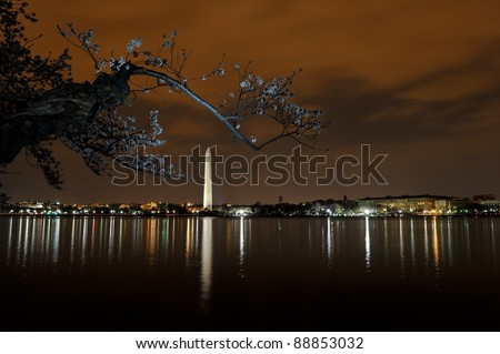 Cherry blossom in Washington DC at night - stock photo
