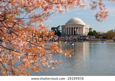 Cherry Blossom in Washington DC, Jefferson Memorial in the background - stock photo