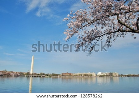 Cherry Blossom in Washington DC, USA