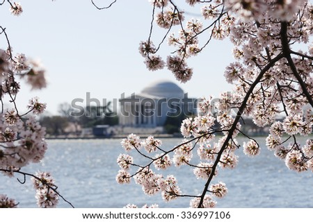 cherry blossom in Washington DC with Jefferson Memorial as background - stock photo