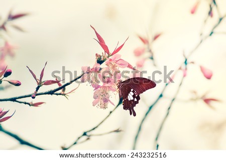 Cherry blossom in wild and butterfly. - stock photo