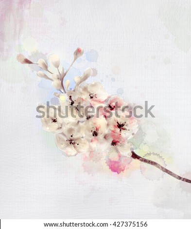 Cherry blossom - Watercolors painting - stock photo