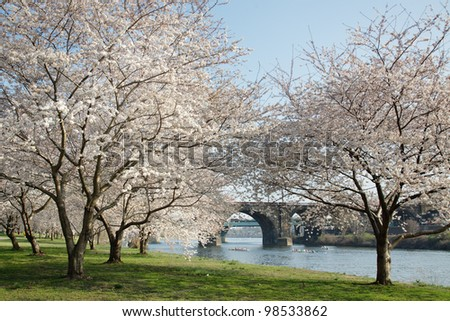 Cherry Blossoms along the Schuylkill River in Philadelphia - stock photo
