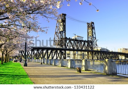 Cherry Blossoms Along Willamette River - stock photo