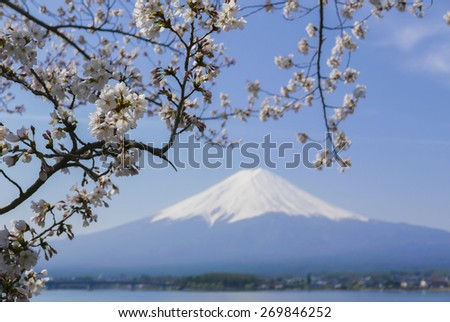 Cherry blossoms and Mount Fuji, Scenery too beauty in Japan. - stock photo