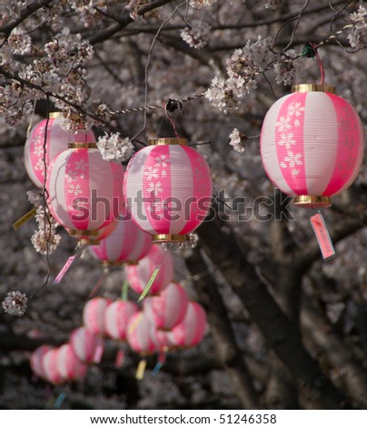 Cherry blossoms and round, pink lanterns at a cherry blossom festival in Osaka, Japan - stock photo