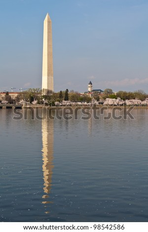 Cherry blossoms around the Tidal Basin in Washington DC with the Washington Monument reflected in the water.