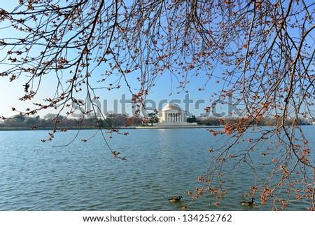 Cherry blossoms around the Tidal Basin with Jefferson Memorial, Washington DC, United States - stock photo