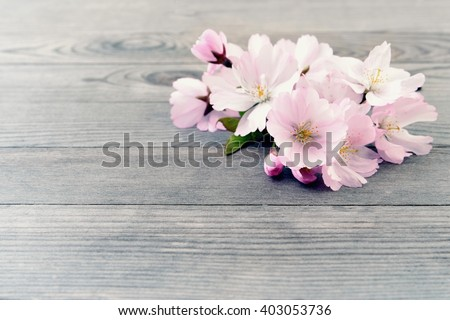 Cherry blossoms. Cherry blossoms on wooden background. Cherry blossoms card with copy space. Cherry blossoms - spring flowers.  Cherry blossoms on old wood background.  - stock photo