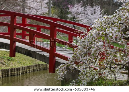 Japanese Garden Cherry Blossom Bridge cherry blossoms japanese garden yokohama city stock photo 88661659