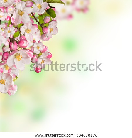 Cherry blossoms over blurred nature background - stock photo